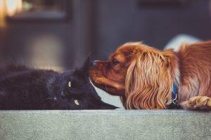 Homöopathische Hausapotheke für Tiere