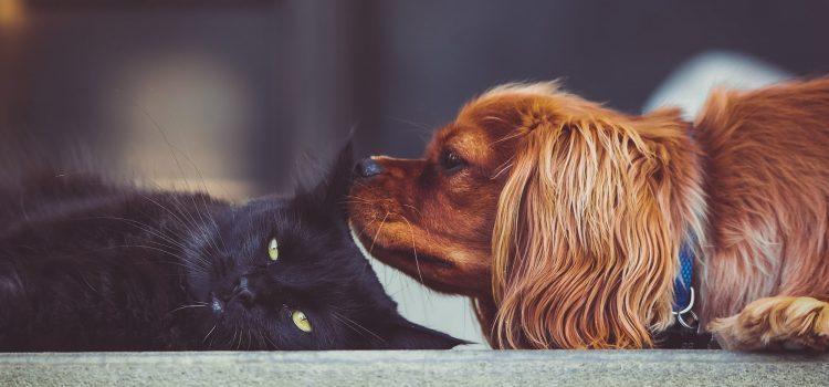 Katzen und Hunde noch fitter mit Naturheilkunde-Kuren